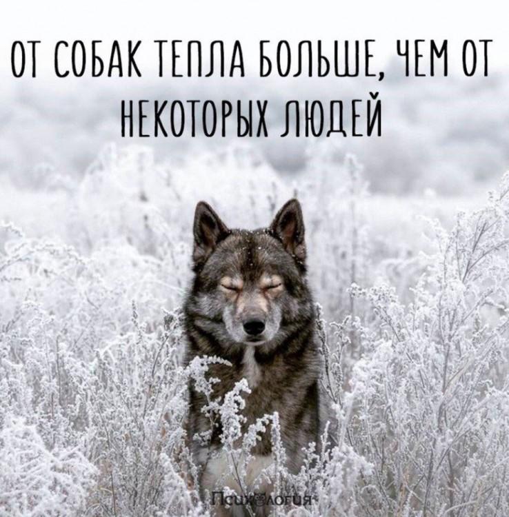 Daska's photos