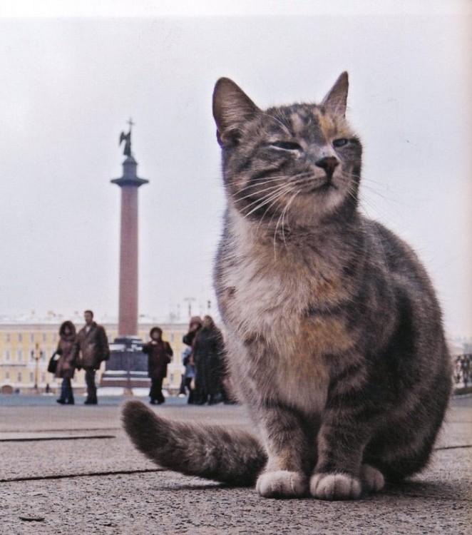 Afurin_Konstantin's photos